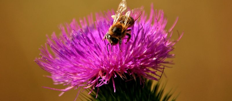 bees-1144258_960_720